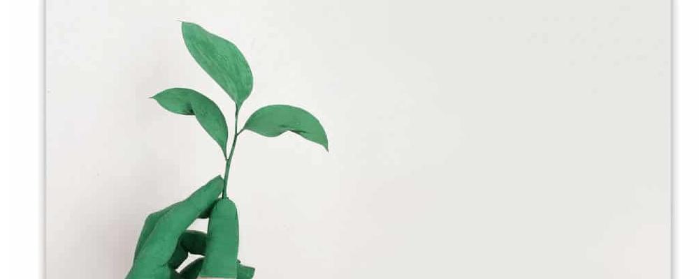 imagem de uma mão segurando um ramo de planta. ilustrativo do conteúdo sobre responsabilidade social e ambiental